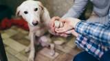 Как кучетата избират своя любим човек