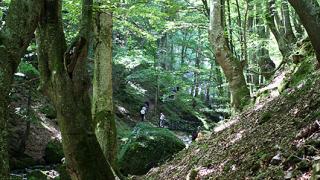 МС прие изцяло нов Закон за горите