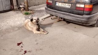 Прокуратурата проверява случая с влаченото на теглич куче