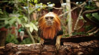 Животните, спасени от изчезване