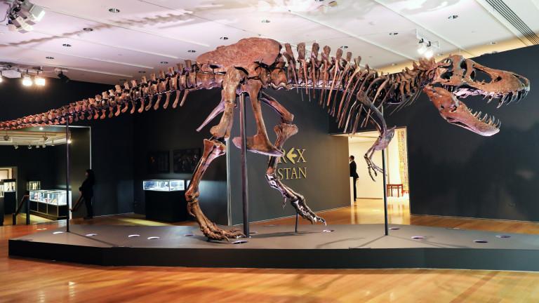 Тиранозавърът Рекс еедин от най-популярните видове динозаври. Виждали сме го