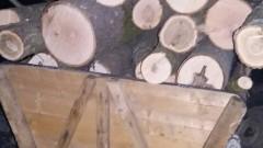 Цигани защитават каруци и дърва от горските