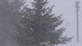 Сняг и паднали дървета блокираха туристи на Витоша