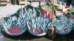 Агенцията по рибарство се мести в Бургас, реши правителството