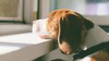 Кучето, което три месеца чака починалия си стопанин