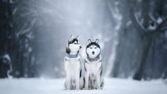Откъде идват имената на кучешките породи