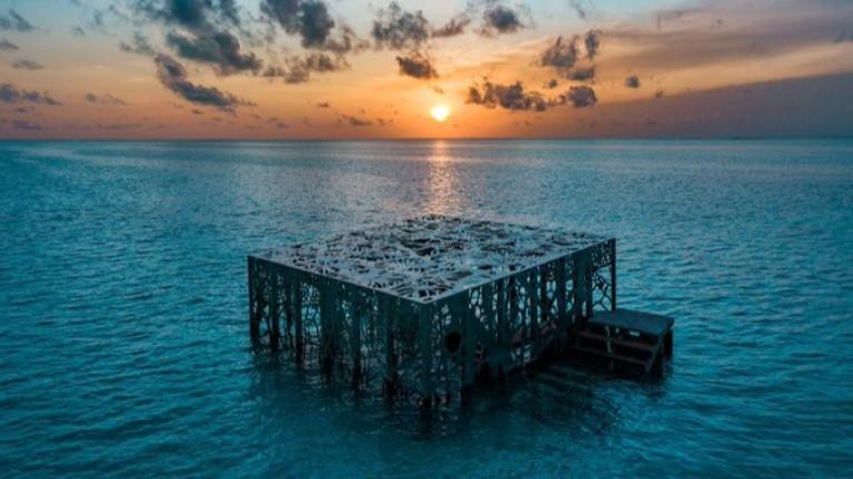 Изкуственият коралов риф на Малдивите, който оживя