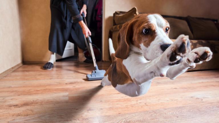 Защо кучетата се страхуват от прахосмукачката