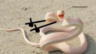 Как биха изглеждали змиите, ако имаха ръце