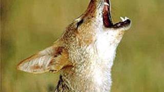 Намериха 7 отровени диви животни