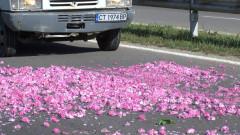 Предлагат по 30 ст./кг помощ на розопроизводителите