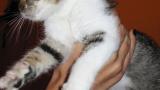 Котката Маша спаси бебе в Русия