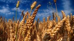 Земеделци в Силистренско пред фалит заради некоректен прекупвач