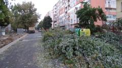 В Нова Загора негодуват срещу масова сеч на дървета