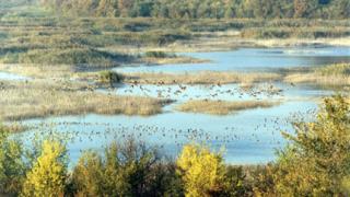 Нови колонии от птици харесаха бреговете на Дунав