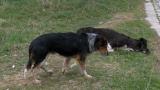 Хасково отказала помощ за бездомните кучета