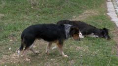 Млада майка е със счупени прешлени след нападение от кучета