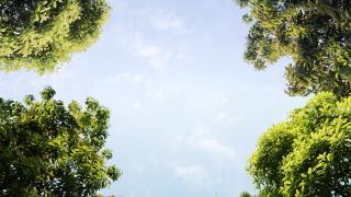 50% от биологичните видове на Земята могат да изчезнат до края на 2100 г.