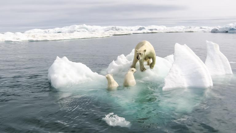 Арктика е преживяла втората си най-топла година от 1900 г.