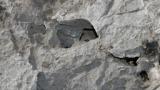 Три концесии за добив на базалт застрашават община Павликени