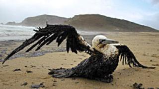 Отново масова смърт на птици