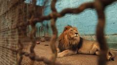 """""""Четири лапи"""" спаси животни от албански """"зоопарк от ада"""""""