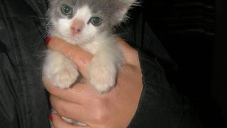 За котките в беда и хората, които им помагат