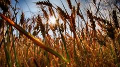 Земеделците могат да подават заявления за подпомагане до 15 юни