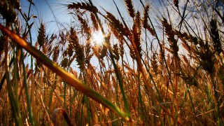 205 земеделци са поискали компенсация за загуби от природни бедствия