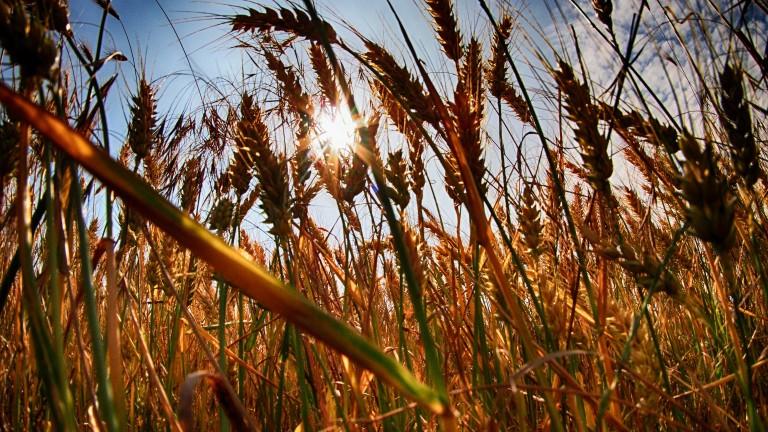 Цената на земеделската земя в Добрич е поевтиняла с 16.5%