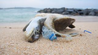Един милион вида застрашени от измиране заради хората