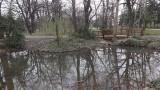 Отричат да има нерегламентирана сеч в Борисовата градина