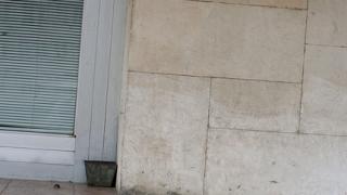 """Откритие - как общините се """"преборват"""" с бездомните кучета"""