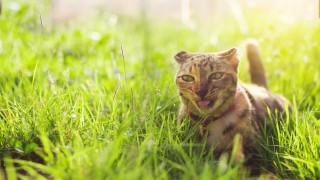 Как да предпазим кучетата и котките си, без да се охарчваме