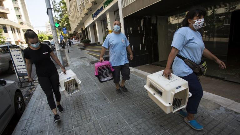 """Български екип на """"Четири лапи"""" отива на мисия в Бейрут в помощ на четириногите"""