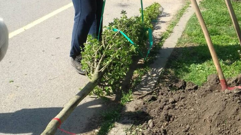 София става по-зелена с нови 2500 дървета