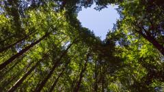 Засегнати от вредители са 500 дка гори край Балчишко