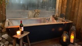 Да спиш сред лъвове и тигри