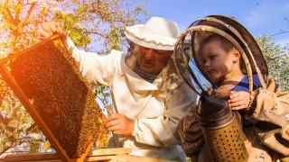 Започва изплащането на финансова помощ за пчеларите
