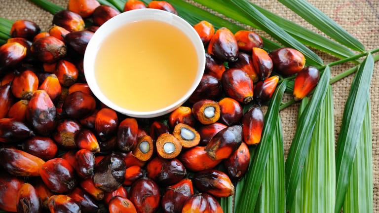 ЕП влиза в битка с палмовото масло в биогоривата