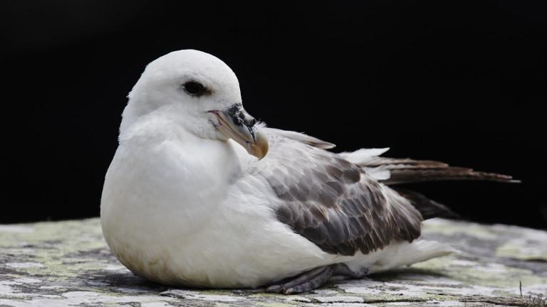 Граждани алармират за мъртви птици от застрашен вид намерени на плажа в Бургас