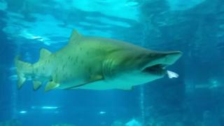 Изграждат най-големите аквариуми за акули у нас в Природонаучния в Пловдив