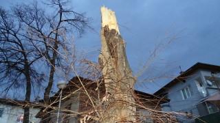 Гражданин съди Столична община заради падналото дърво