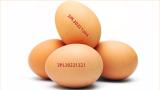 Полски яйца със салмонела издирва БАБХ по магазините ни