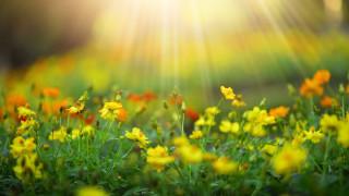 Защо слънцето ни прави щастливи