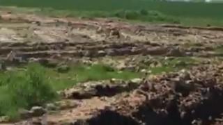 ООН: 70 на сто от непокритите с ледници почви са деградирали, превръщат се в пустиня