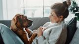 Кучетата, лаенето, изправянето на задните лапи и защо го правят
