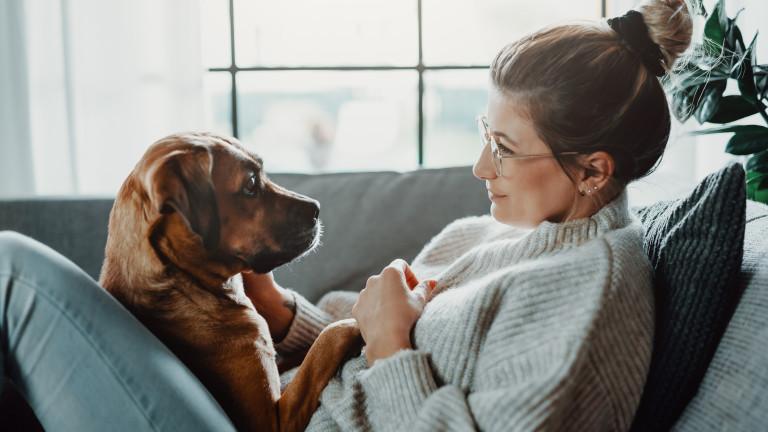 Тайният език на кучетата