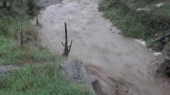 Мъртва риба изплува в река Янтра