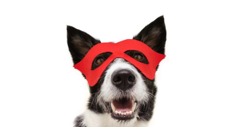 Бездомното куче герой